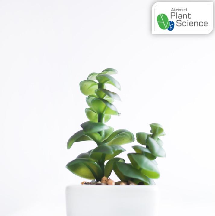 Can Plants Taste?