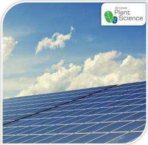 Jamun powered Solar cells