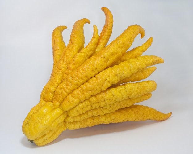 Buddha's hand, the fingered citron