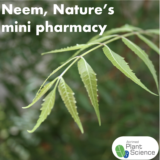 Neem, nature's mini pharmacy